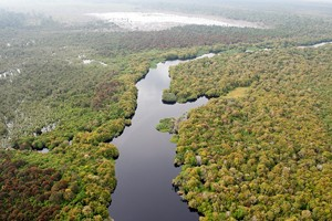 Recognising a shared responsibility in forest conservation