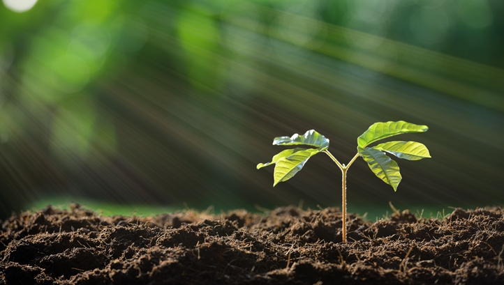 The seeds of sustainability are all around us