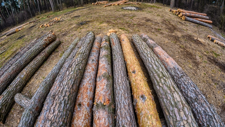 Time for action on forest finance