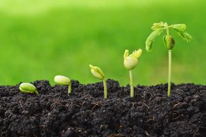 Creating an environment for growth