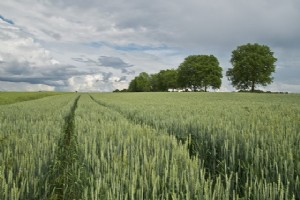 A more sustainable agriculture business