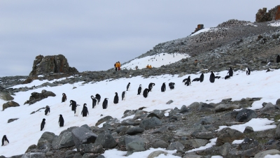 Taking pole position on sustainability: how Antarctica changed the way I see business