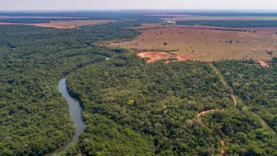 Investors and businesses call for action to support deforestation-free soy in Brazil