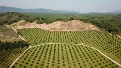 Biggest food brands 'failing goals to banish palm oil deforestation'