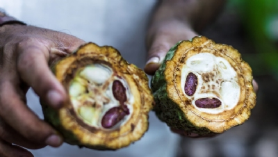 The overallCocoa Life sourcing programme aims to eventually reach more than 200,000 farmers across six countriesand benefit more than a million people by 2022