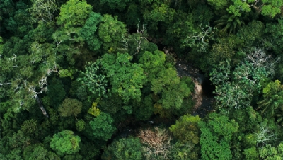 With rates of forest loss accelerating, the private sector is under increasing pressure to increase ambition and action on forest protection